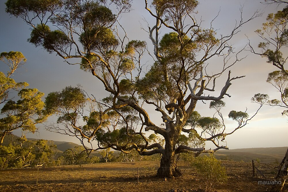 The Tree by mawaho