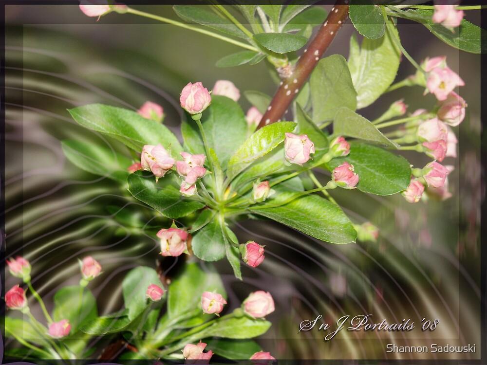 Flower in Bloom by Shannon Sadowski