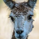 Here's Looking at you Kid..... by Tracie Louise