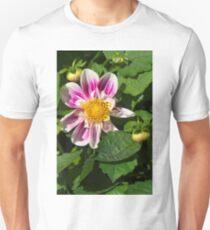 Pink Dahlia Close-up T-Shirt