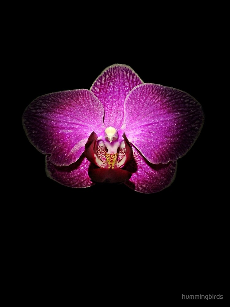 Purple Orchid on Black by hummingbirds