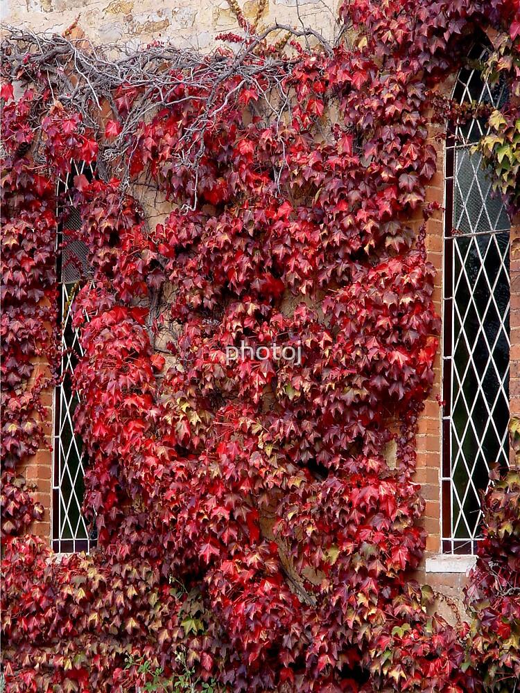 photoj  'A Blazing Window ' by photoj