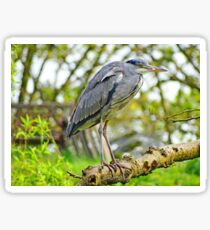 Young Heron Sticker