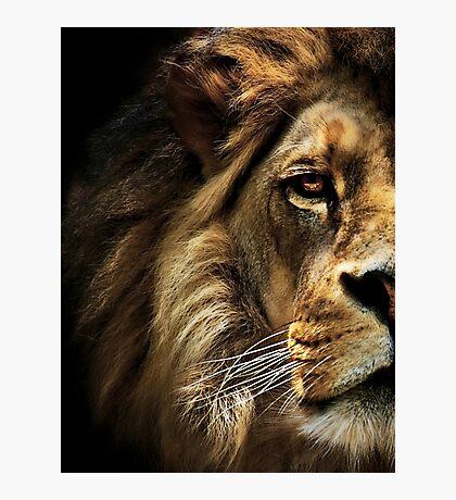 Majestic Dominance Photographic Print