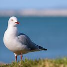 seagull by the seaside... by Glenda Williams