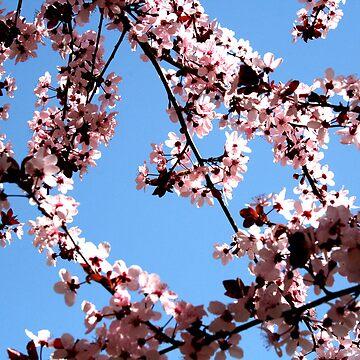 Jerusalem Blossoms by Ames