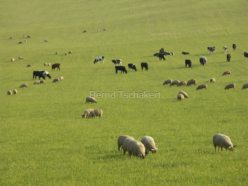 This pasture is for all of us by Bernd Tschakert