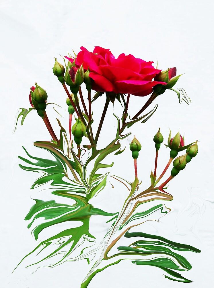 Lady Rose by Jim  Darnall