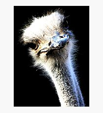 Ostrich Face With Goofy Expression Photographic Print