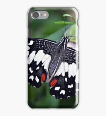 Butterfly with black, white and red wings in nature iPhone Case/Skin