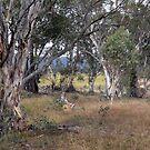 AUSTRALIANBUSH by helmutk