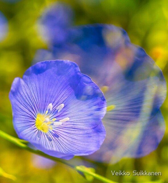 Blue Flax by Veikko  Suikkanen