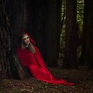 In the red woods by Margaret Metcalfe