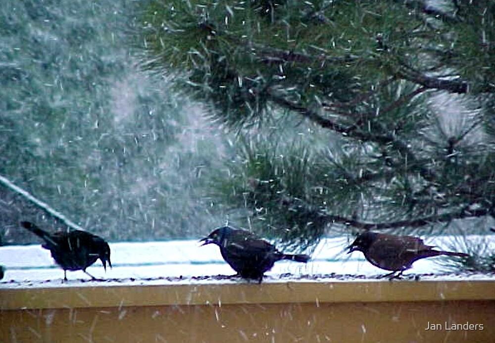 3 Stooges in the Snow by Jan Landers