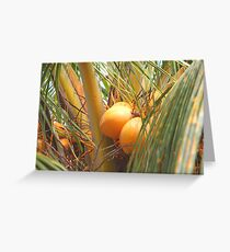 Coconuts tree Cuba Greeting Card