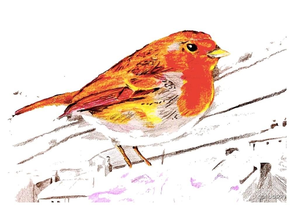 Robin in snow by gphudson