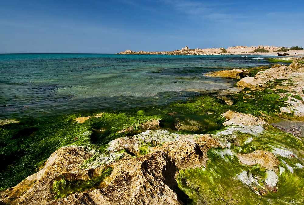 Green Coast by Craig Hender