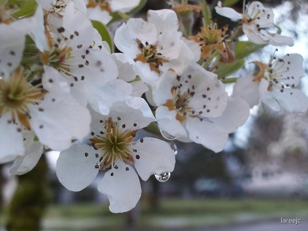 Pear Blossom Tears by lareejc