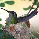 Hummingbird returns by jdmphotography