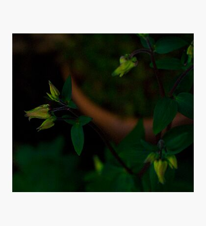 Opening Soon Photographic Print