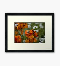 Just Bee Framed Print