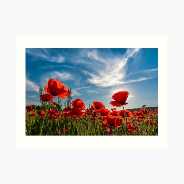poppy flowers field in mountains Art Print