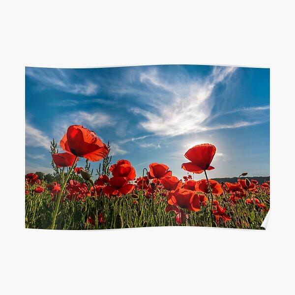poppy flowers field in mountains Poster