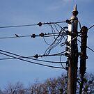 Power Line Robin by dougie1