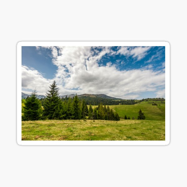 conifer forest on a hill in summer landscape Sticker