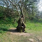 a tree by dougie1