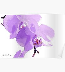 Orchid Phalaenopsis Poster