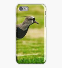Southern Lapwing (Vanellus chilensis) iPhone Case/Skin