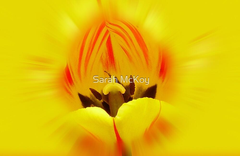 Tulip Candy Corn by Sarah McKoy