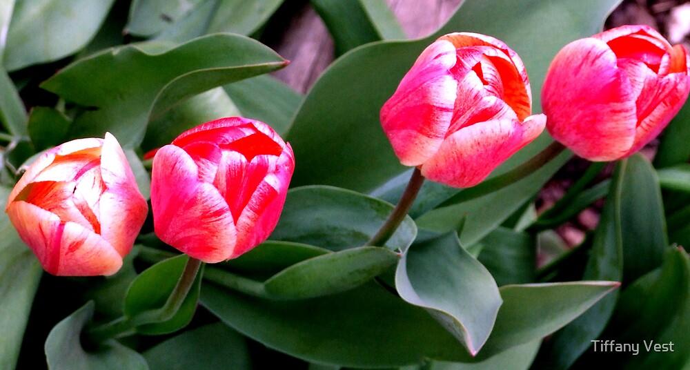 Spring Tullips by Tiffany Vest
