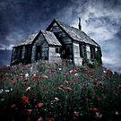 Little hut in a poppy field by Kurt  Tutschek