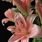 Lilies in Pink by Lynn Gedeon