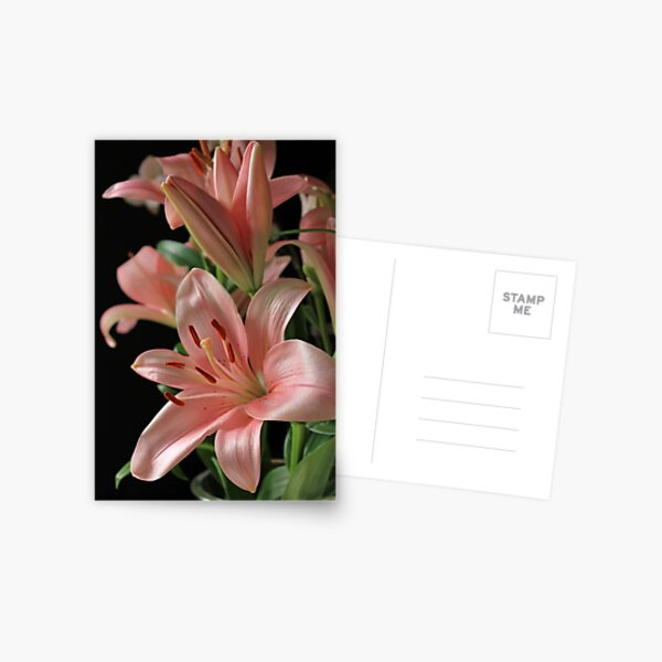 Lilies in Pink Postcard