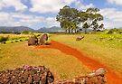 Kūkaniloko Birthstones State Monument .3 by Alex Preiss