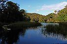 Königlicher Nationalpark, NSW von Evita