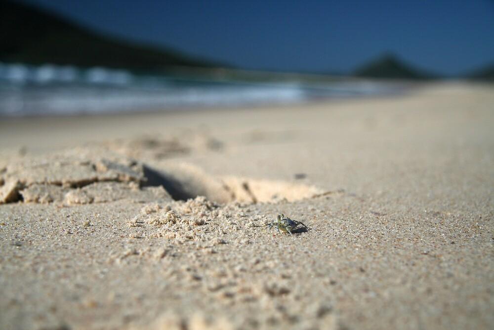 Crab Patrol, Hawks Nest beach Australia by Andrew Conn