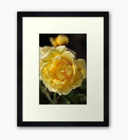 Happy Yellow Rose Framed Print