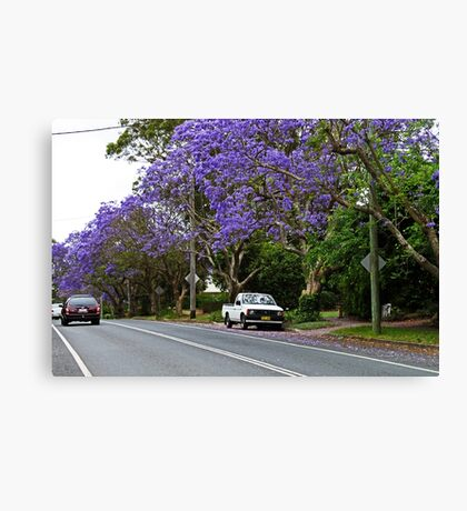 Jacaranda In Bloom Canvas Print