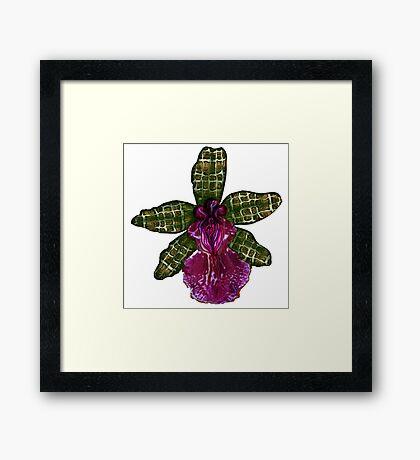 Maia'Pinque Framed Print
