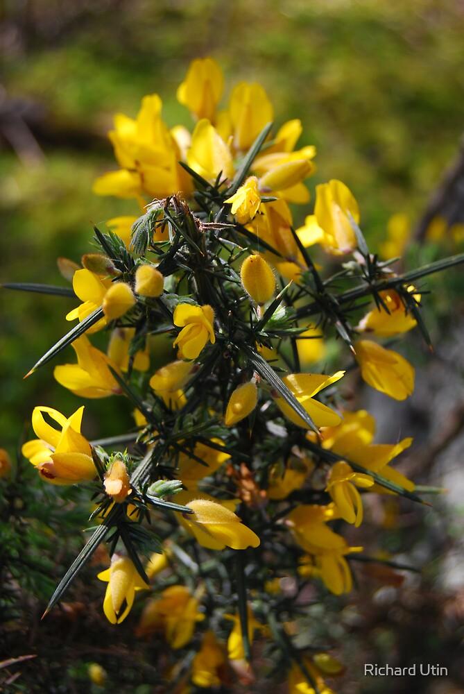 Yellow And Very Sharp by Richard Utin