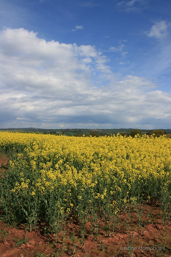 Oil Seed Rape by Justine Humphries