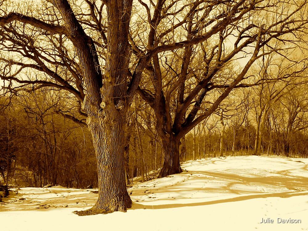 Great winter oaks of Iowa by Julie  Davison