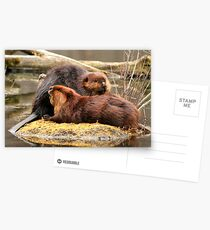 Beaverly love Postcards