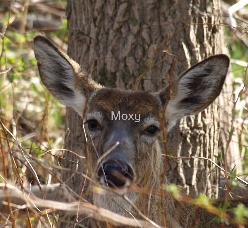 Deer Closeup 4 by Moxy