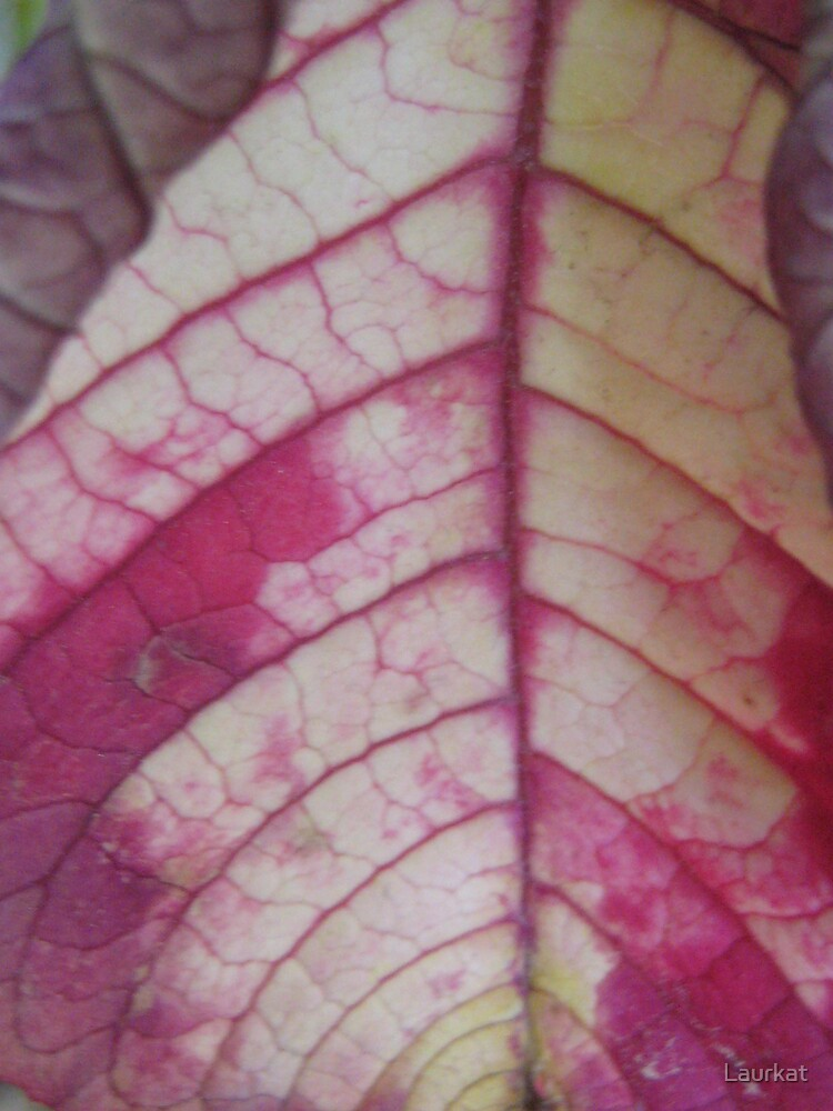 fuchsia and cream leafveins in spring by Laurkat