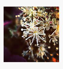 Macro Flower 2 Photographic Print